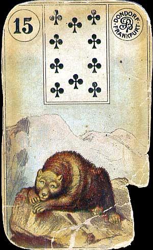 15-bear